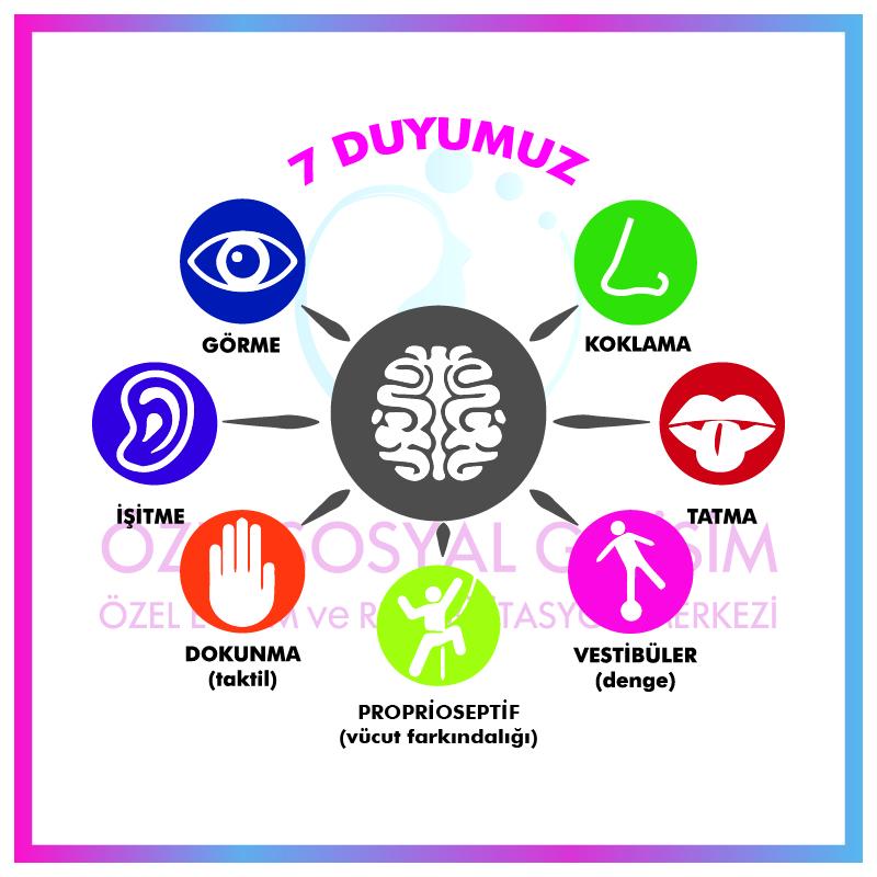 7 Duyu Sistemimiz